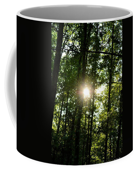 Last Light In The Forest Coffee Mug featuring the photograph Last Light In The Forest by Maria Urso