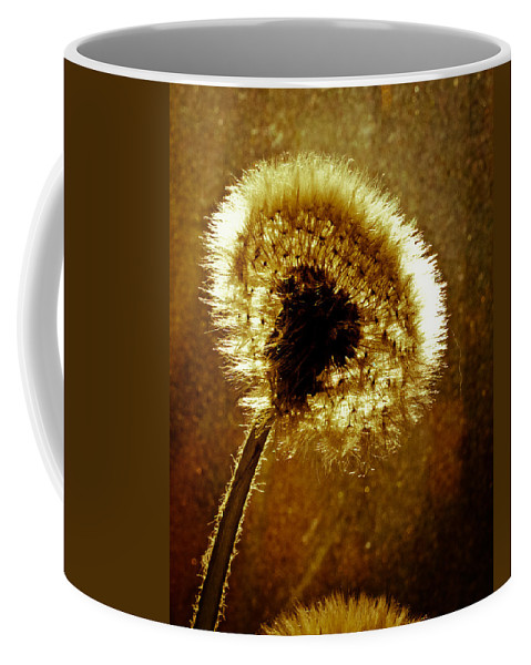 Flowers Coffee Mug featuring the photograph Last Light Of Day by Bob Orsillo