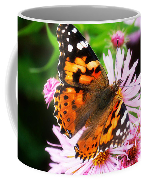 Flower Coffee Mug featuring the photograph Late Summer Painted Lady by Marilyn Hunt