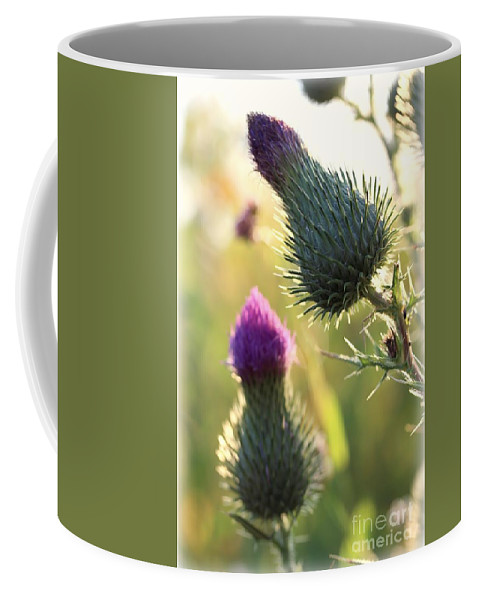 Thistle Coffee Mug featuring the photograph Late Summer Thistle - 2 by Kenny Glotfelty