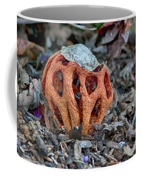 Latticed Stinkhorn Coffee Mug featuring the photograph Latticed Stinkhorn by Betty Depee