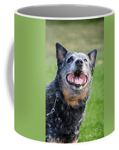 Cattle Dog Coffee Mug featuring the photograph Laughing Dog by Susan Herber