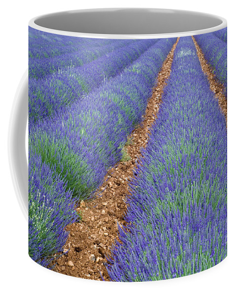 Lavender Coffee Mug featuring the photograph Lavendel 2 by Arterra Picture Library