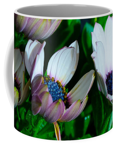 Flower Coffee Mug featuring the photograph Lavender Frost African Daisy by Donna Brown