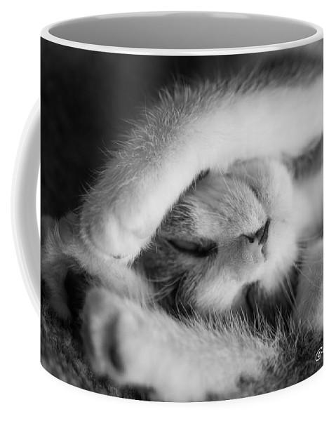 Katmai Kitty Coffee Mug featuring the photograph Lazy Day Bw by Joan Wallner