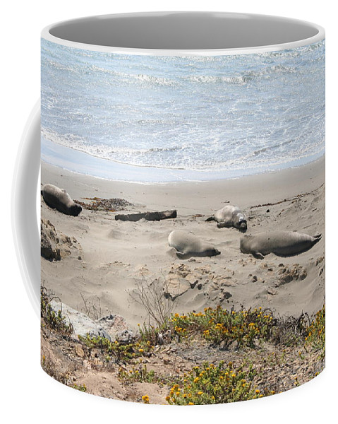 Beach Coffee Mug featuring the photograph Lazy Seals by Christiane Schulze Art And Photography