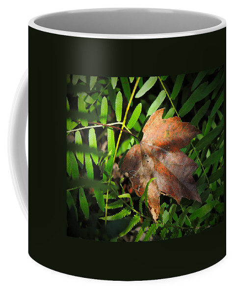 Phil Coffee Mug featuring the photograph Leaf Among Ferns by Phil Penne