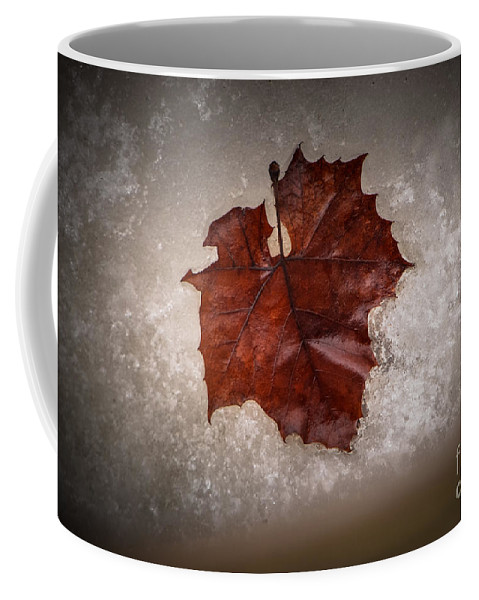 Leaf Coffee Mug featuring the photograph Leaf In Snow by Grace Grogan