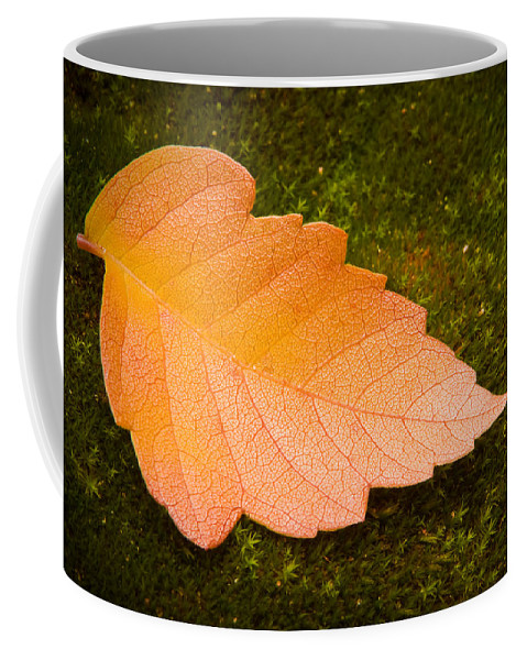 3scape Photos Coffee Mug featuring the photograph Leaf On Moss by Adam Romanowicz