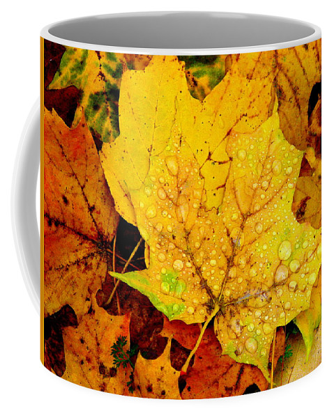 Droplets Coffee Mug featuring the photograph Leaf Portait 1 by Rodney Lee Williams