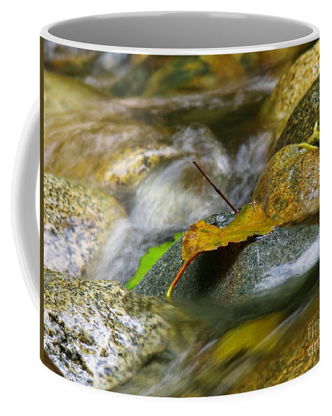 Leaves Coffee Mug featuring the photograph Leaves On The Rocks by Sharon Talson