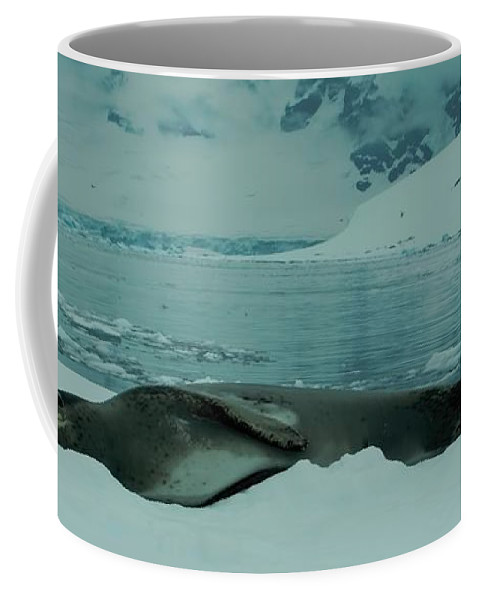 Leopard Seal Coffee Mug featuring the photograph Leopard Seal Hauled Out by Amanda Stadther