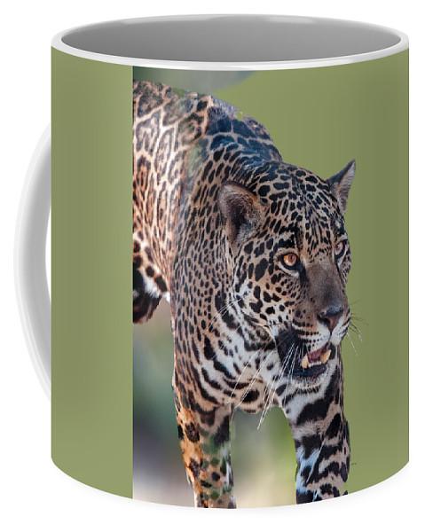 Animal Coffee Mug featuring the photograph Jaguar Walking Portrait by William Bitman