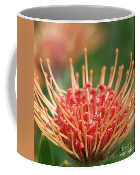 Aloha Coffee Mug featuring the photograph Leucospermum Pincushion Protea Flower - Tropical Sunburst - Hawaii by Sharon Mau