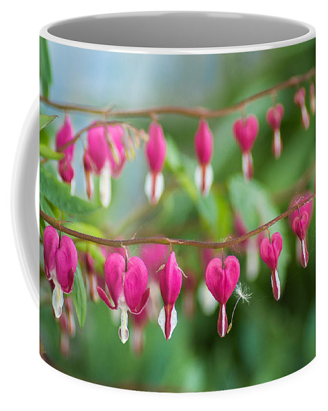 White Coffee Mug featuring the photograph Liberal Supply Of Bleeding Hearts by Bill Pevlor