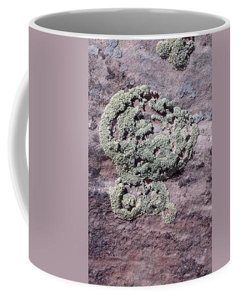 Lichen Coffee Mug featuring the photograph Lichen Patterns by Susan Woodward