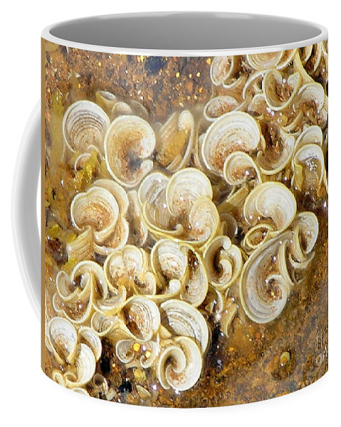 Sea Life Coffee Mug featuring the photograph Life On The Rocks by Mary Deal