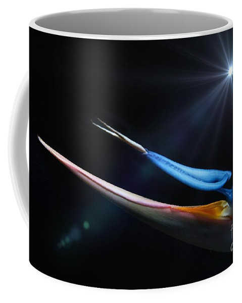 Bird Of Paradise Coffee Mug featuring the photograph Light Above Paradise by Michael Moriarty
