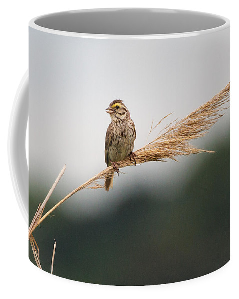 Bird Coffee Mug featuring the photograph Light As A Feather by Everet Regal