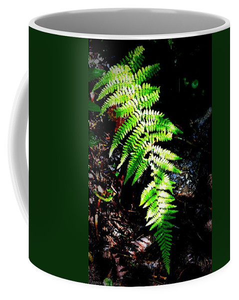 Fern Coffee Mug featuring the photograph Light Play On Fern by Tara Potts