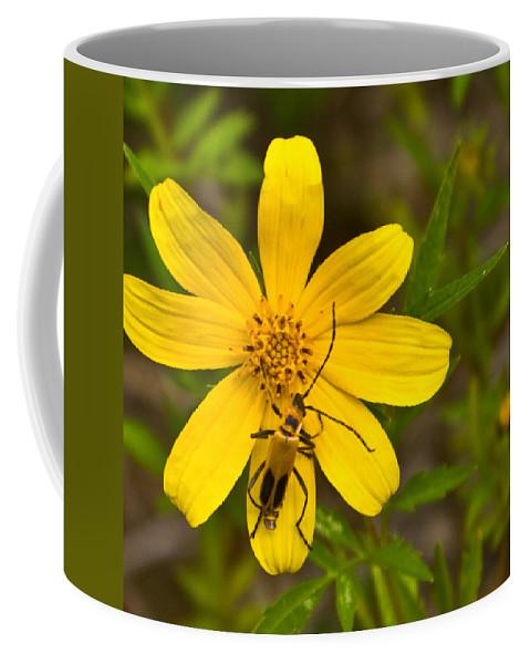 Lampyridae Coffee Mug featuring the photograph Lightning Bug On Flower by Douglas Barnett