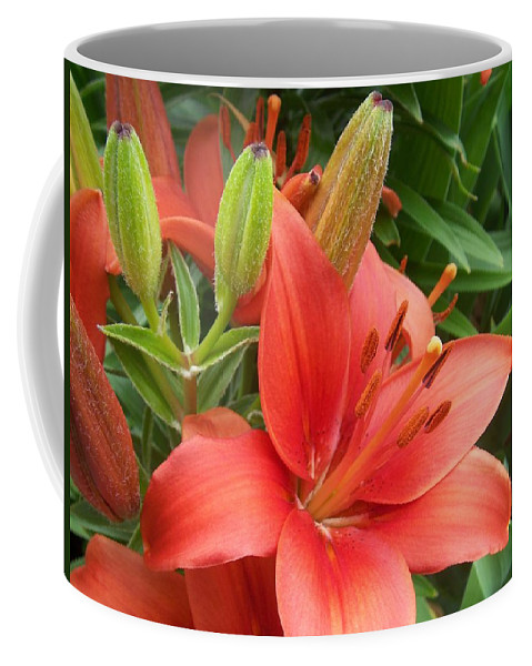 Flower Coffee Mug featuring the photograph Lillys And Buds 1 by Anita Burgermeister