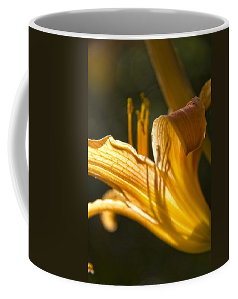 Lily Coffee Mug featuring the photograph Lily In The Yard by Daniel Sheldon