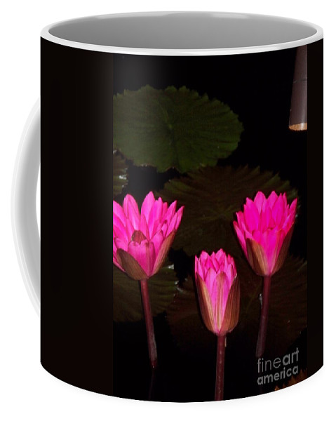 Water Lilies Coffee Mug featuring the photograph Lily Night Time by Eric Schiabor