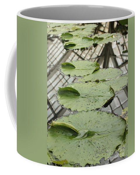 Lily Pads Coffee Mug featuring the photograph Lily Pads With Reflection Of Conservatory Roof by Carol Groenen