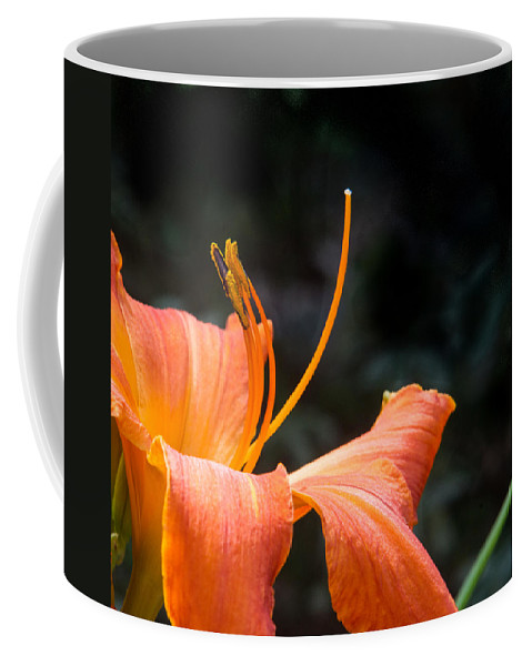 Lily Coffee Mug featuring the photograph Lily Showing Pistil And Anthers by Douglas Barnett