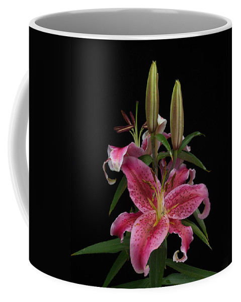 Alberta Coffee Mug featuring the photograph Lily With Buds by Douglas Barnett