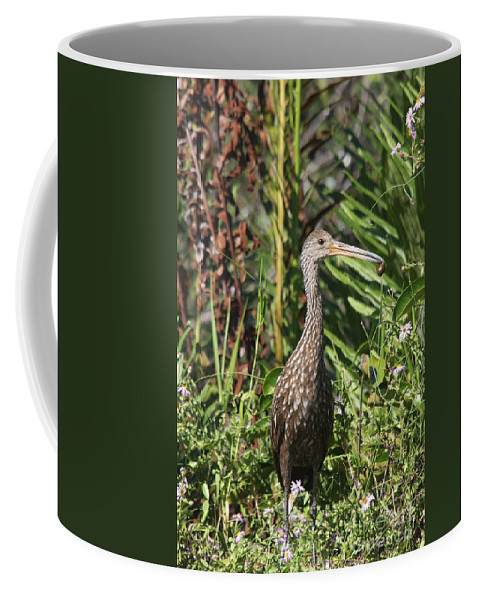 Limpkin Coffee Mug featuring the photograph Limpkin With An Apple Snail by Christiane Schulze Art And Photography