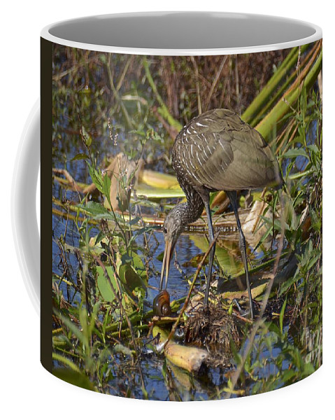 Limpkin Coffee Mug featuring the photograph Limpkin With Lunch by Carol Bradley