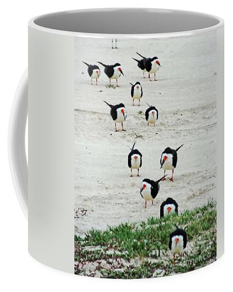 Bird Coffee Mug featuring the photograph Line Up Black Skimmers by Lizi Beard-Ward