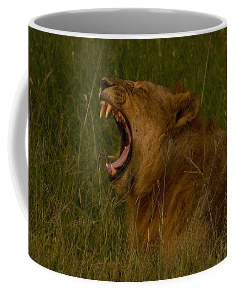 Panthera Leo Coffee Mug featuring the photograph Lion  #1050 by J L Woody Wooden