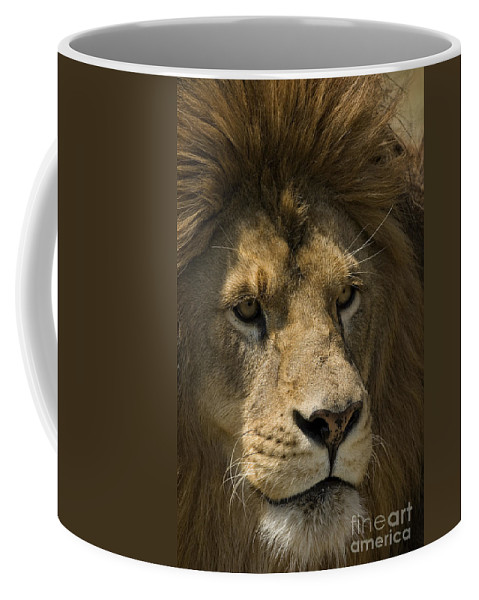 Lion Coffee Mug featuring the photograph Lion-animals-image by Wildlife Fine Art