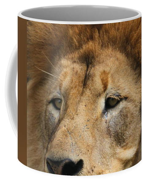 The Lion King Coffee Mug featuring the photograph Lion Eyes by Dan Sproul