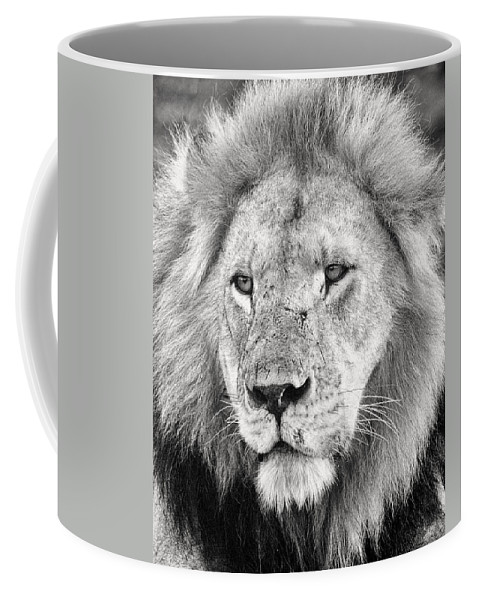 3scape Coffee Mug featuring the photograph Lion King by Adam Romanowicz
