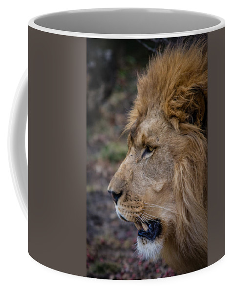 Lion Coffee Mug featuring the photograph Lion by Mike Burgquist
