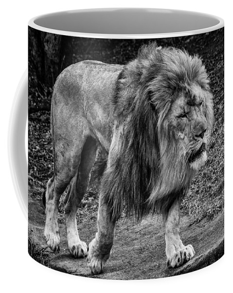Lion Coffee Mug featuring the photograph Lion On The Prowl by Mike Burgquist
