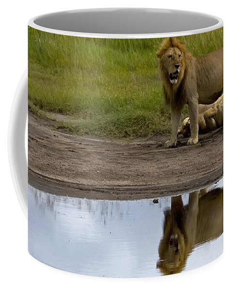 Panthera Leo Coffee Mug featuring the photograph Lions  #1504 by J L Woody Wooden