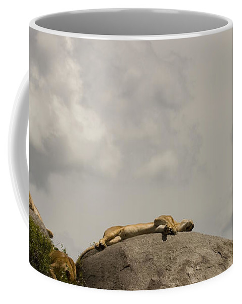 Panthera Leo Coffee Mug featuring the photograph Lions  #8123 by J L Woody Wooden