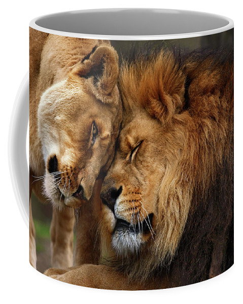 Lion Coffee Mug featuring the photograph Lions In Love by Emmanuel Panagiotakis