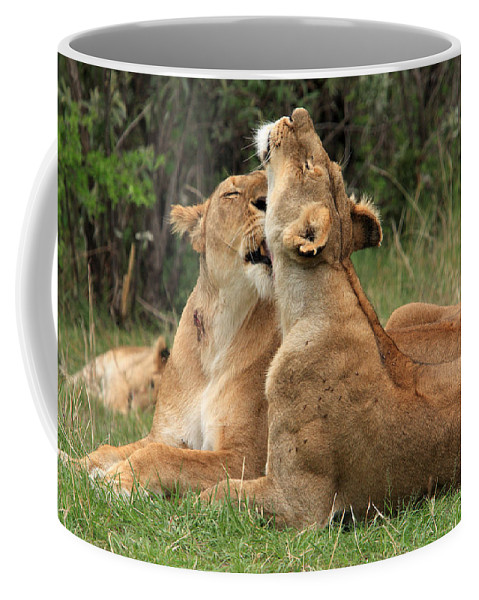 Lion Coffee Mug featuring the photograph Tenderness In The Wild by Aidan Moran