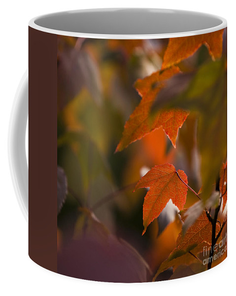 Acalycina Coffee Mug featuring the photograph Liquidambar Autumn by Anne Gilbert
