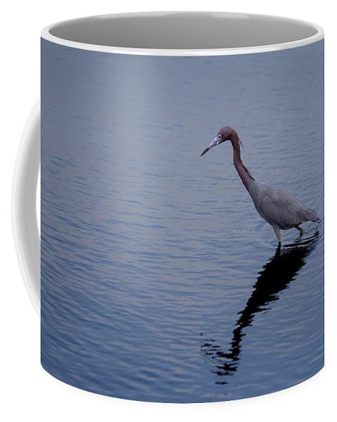 Little Blue Heron Coffee Mug featuring the photograph Little Blue Heron On The Hunt by John M Bailey
