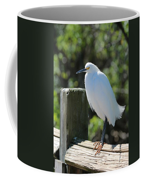 Egret Coffee Mug featuring the photograph Little Egret On The Boardwalk by Carol Groenen