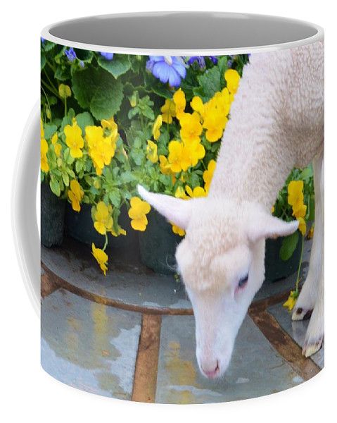 #lamb #.calf Coffee Mug featuring the photograph Little Lamb by Kathleen Struckle