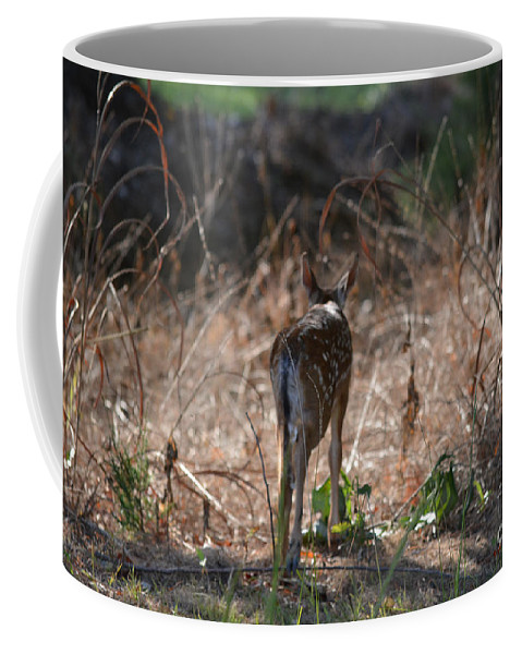 Bambi Coffee Mug featuring the photograph Little One by Barb Dalton