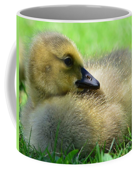 Goose Coffee Mug featuring the photograph Little One by Kathleen Struckle